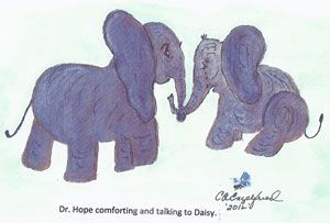 Daisy The Elephant